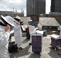 camera crew on a roof